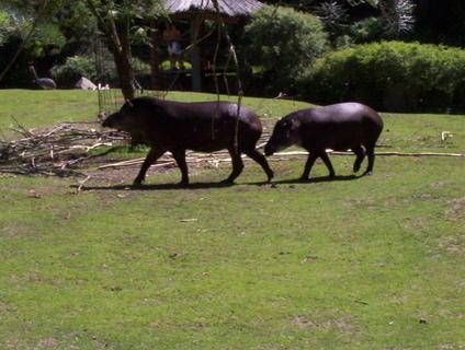 FOTKA - v zoo