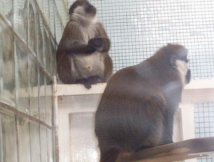 FOTKA - opice za sklem
