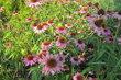 Květy v parku