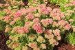 Okrasný květinový trs