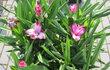 FOR ARCH + FOR GARDEN - nabídka zahradnictví