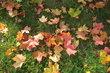 Barevné listí oko potěší