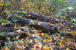 Záměrná činnost - tlení stromů