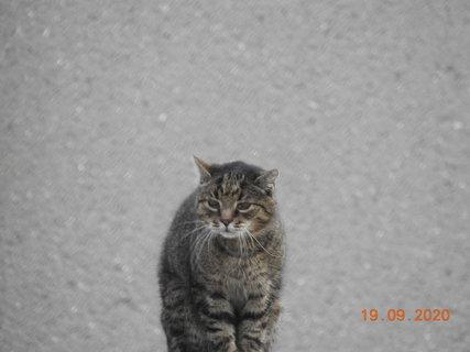 FOTKA - Sousedovic starý pan kocour -18 let