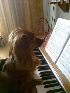FOTKA - Klavírní virtuos