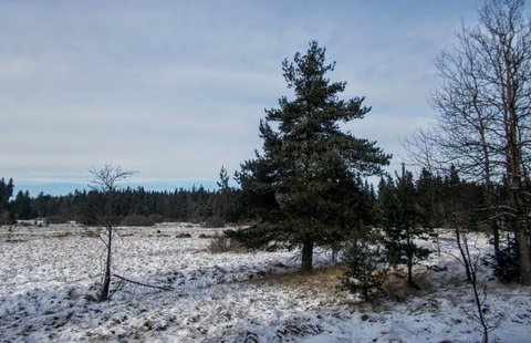 FOTKA - Slavkovský les,
