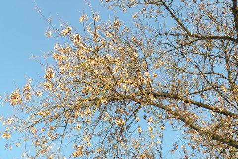 FOTKA - větve a obloha 1.12.