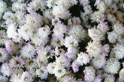 FOTKA - ještě kvete venku v květináči