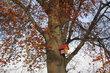 Ekocentrum Prales  - Malovaná ptačí budka