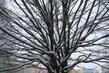 Koruna stromu ...