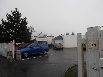 FOTKA - Moje letošní první cesta (4.1.) vedla na kliniku do Průhonic