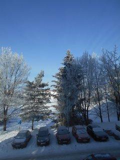 FOTKA - Azurová obloha a stromy s bílou pokrývkou