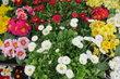 Nabídka květinářství