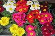Pestrá nabídka před květinářstvím