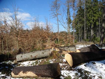 FOTKA - pořádné kusy dřeva