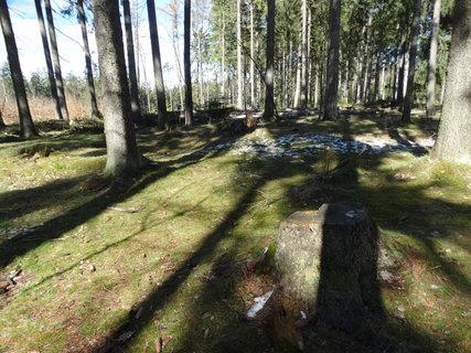 FOTKA - lesík s popraškem