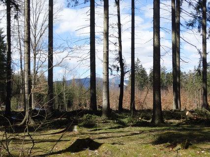 FOTKA - stromy a jarní příroda
