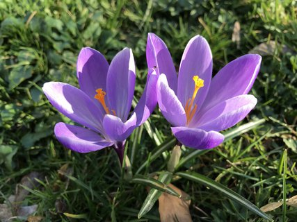 FOTKA - první doteky jara