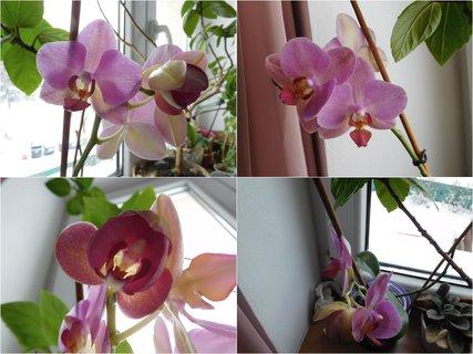 FOTKA - Kvetoucí a rozvíjející se květ (9.2.)