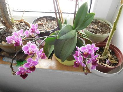 FOTKA - Orchidejka s malými květy (9.2.)