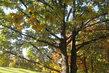 Dnes - podzim v parku