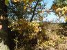Listí se zbarvuje