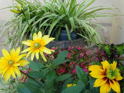 FOTKA - žluté květy v KZ