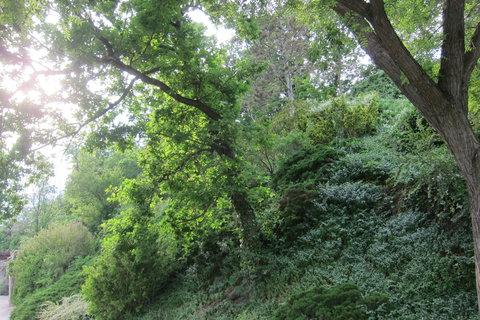 FOTKA - Příroda v ZOO - v červnu