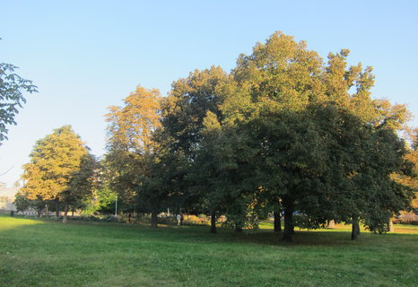 FOTKA - Olšanské náměstí  - pod parkem Parukářka
