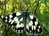 hmyzí nadělení