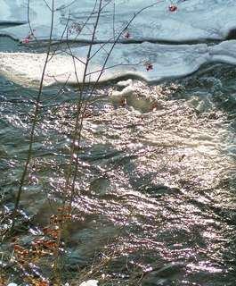 FOTKA - zima na řece