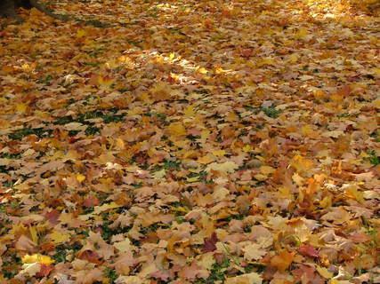 FOTKA - Podzimní příroda