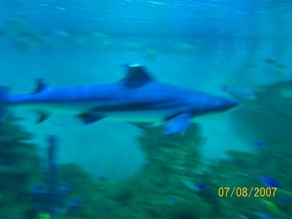 FOTKA - žralok