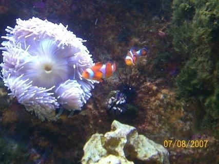 FOTKA - Nemo