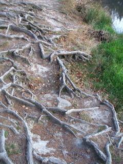 FOTKA - Kořeny