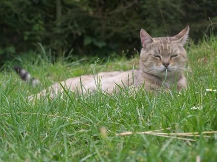 FOTKA - kocour v trávě