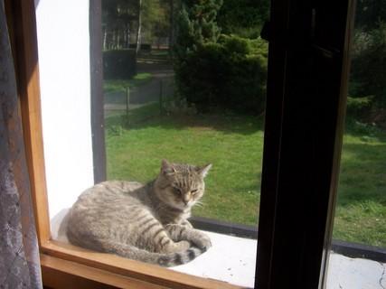FOTKA - na okně ležela kočka...