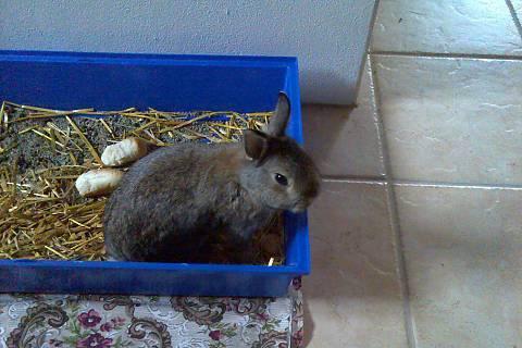 FOTKA - náš králíček