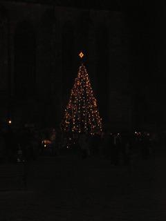 FOTKA - Stromek v noci