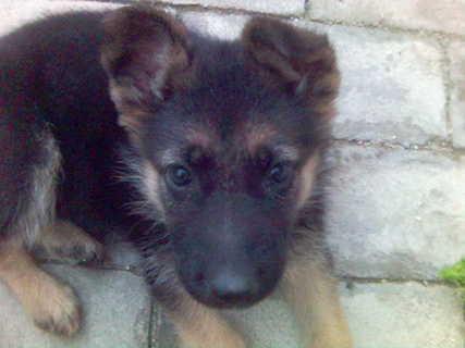 FOTKA - psí miminko