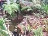 z botan.zahrady