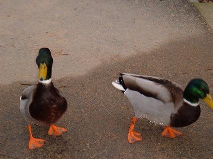 FOTKA -  Dva  kačeři