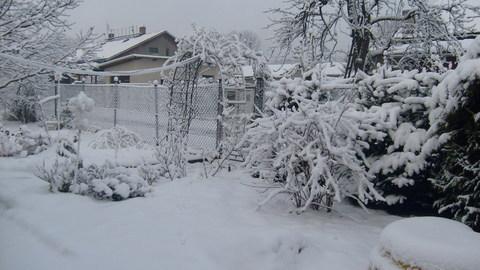 FOTKA - zima 2009