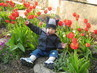 tulipánek