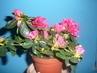 moje kytky