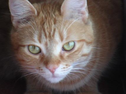 FOTKA - Naše kočička