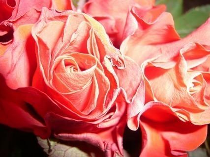 FOTKA - ružička;