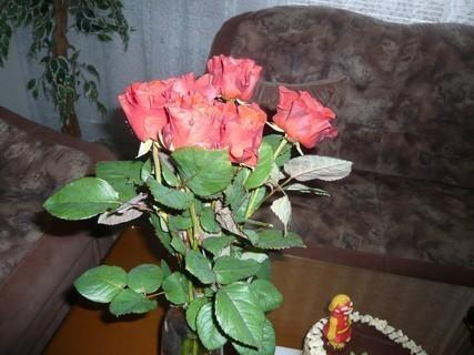 FOTKA - ružička++