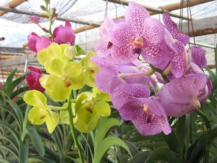 FOTKA - orchidea.......