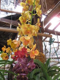 FOTKA - orchidea......